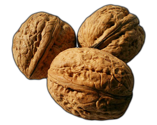 Nuts Walnuts Learn About Walnuts Walnuts Lessons